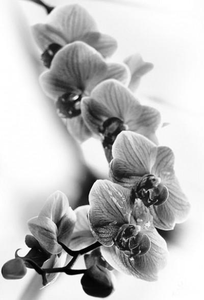 Красивый эскиз татуировки - орхидея