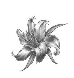 Черно-белый эскиз тату - цветок лилии
