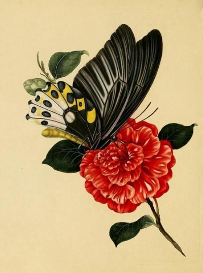 Цветной эскиз тату бабочка на цветке