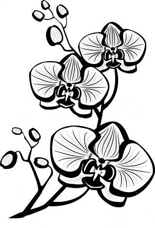 Черно-белый эскиз татушки орхидеи