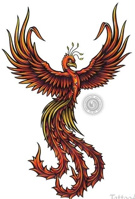 Вверх красивый эскиз тату феникс