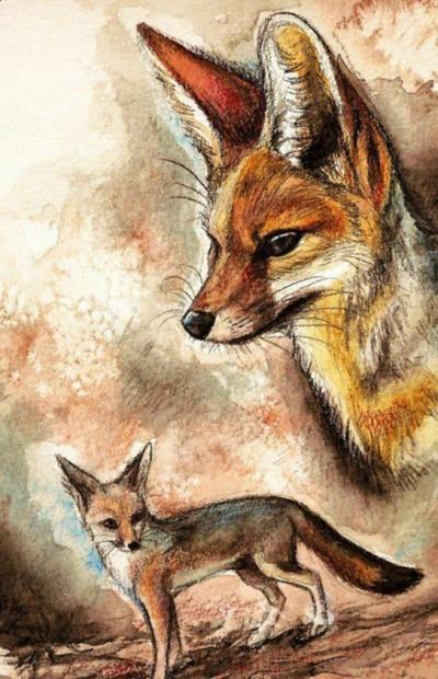 Цветной эскиз тату - лисы