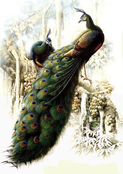 красивый цветной эскиз тату павлина