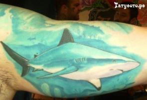 Тату акула - на мышце