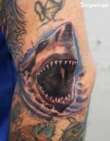 Тату акула - на локте